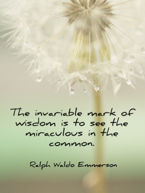 The invariable mark of wisdom is to see the miracuous in the common